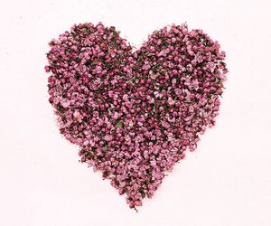 heart, pink, and xx image