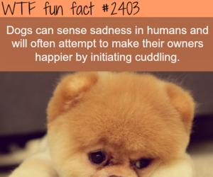 dog, sadness, and facts image