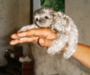 sloth, glitter, and cute image