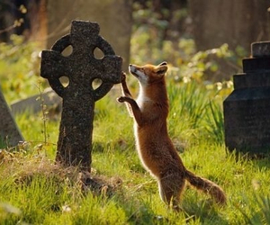 fox, graveyard, and very old image