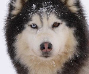 snow, wolf, and animals image
