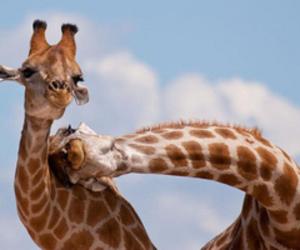 animals, pretty, and tumblr image