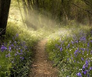 forest and flowers image
