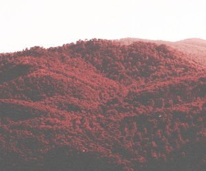 header, red, and layout image