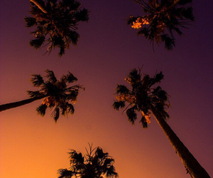 palm trees, sunset, and summer image