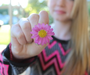 flower, perfection, and photography image