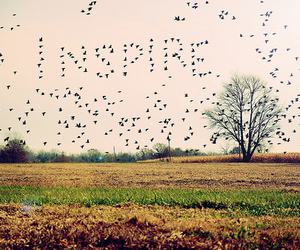 inspire, bird, and nature image