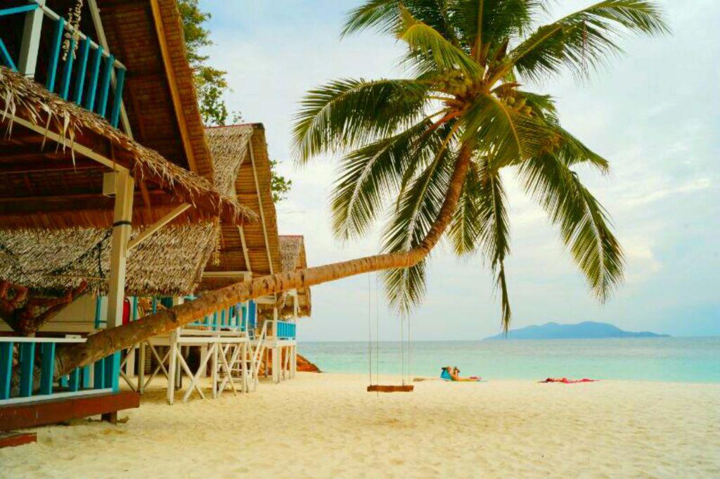 beach, swimming, and palm tree image