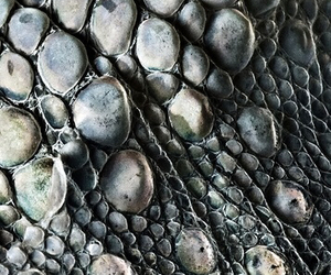 grey, texture, and gecko skin image
