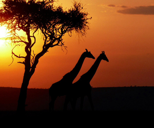 africa, photos, and animals image