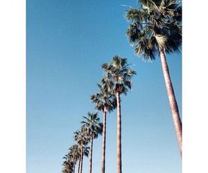 la, los angeles, and palm trees image