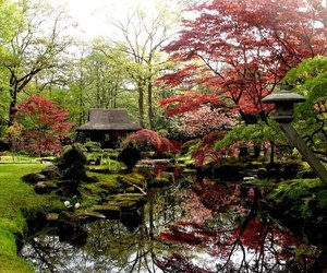 garden, japanese, and traditional image