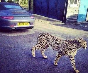 luxury and animal image