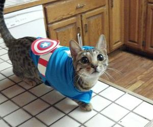 captain america, steve rogers, and cat image