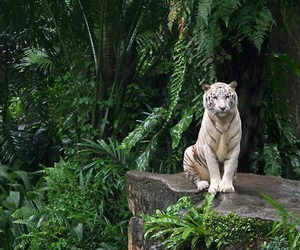tiger and nature image