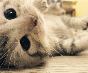 cat, animal, and whiskers image
