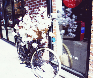 bicycle, flowers, and nyc image