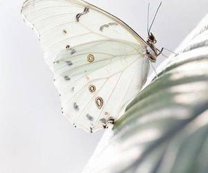butterfly, white, and nature image