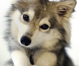 cute, dog, and animal image