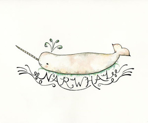 narwhal image