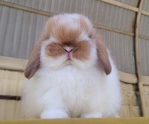 bunny, fluffy, and pet image