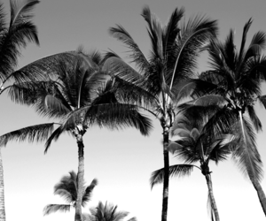 palms, black and white, and palm trees image