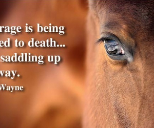 horse, quote, and country image