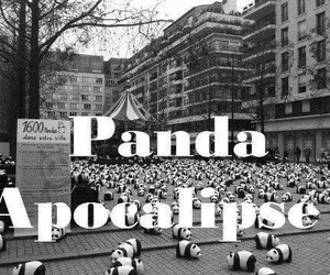 panda, apocalypse, and black and white image