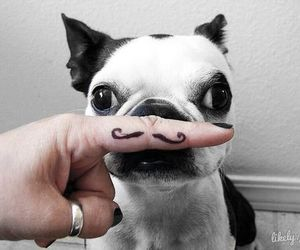 dog, cute, and moustache image