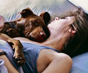 dog, cute, and sleep image