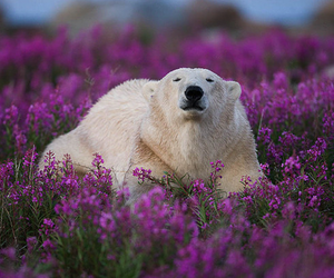 bear, cute, and flowers image