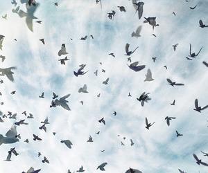 bird and sky image