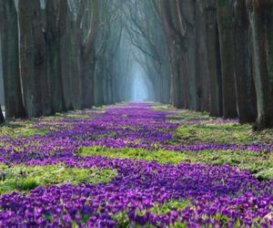 crocuses, flowers, and forest image
