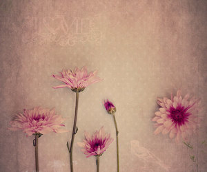 creative, flowers, and pink image