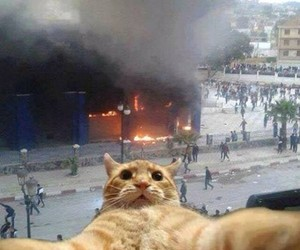 cat, selfie, and fire image
