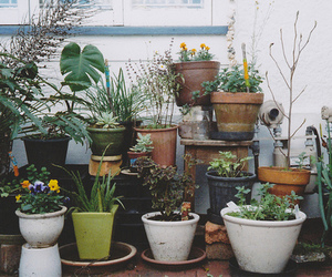 plants, flowers, and vintage image