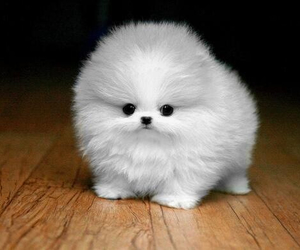 animals, fluffy, and cute image