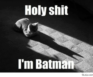 batman, cat, and funny image