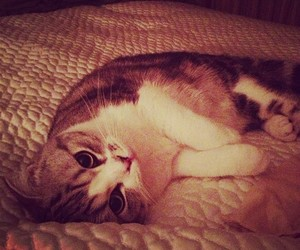 cat, cute, and Taylor Swift image