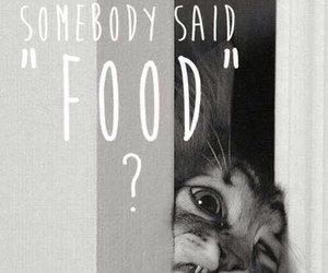 cat, food, and me image