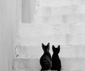 black and white, cats, and photography image