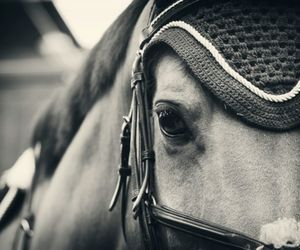 horse, equestrian, and animal image