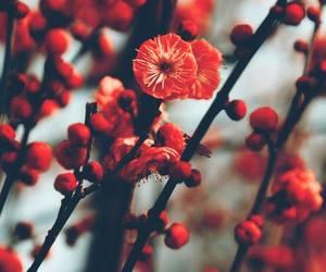 erd, spring, and instagram image