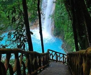 beautiful, tropical, and paradise image