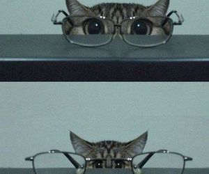cat, glasses, and funny image