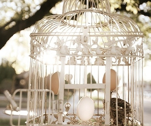 birdcage, cage, and nature image