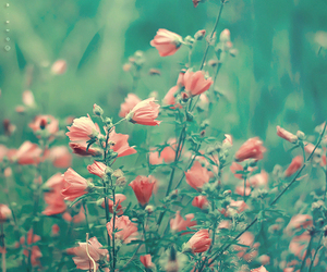 beautiful, nature, and Wild Flowers image