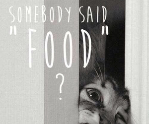 food and my cat lol image