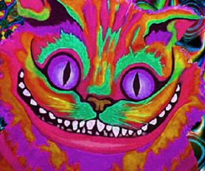 cats, funny, and colours image