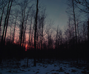 sky, forest, and photography image